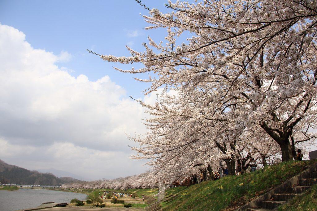 桜前線の速さ・速度